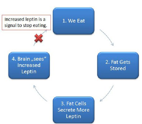 burn fat with leptin